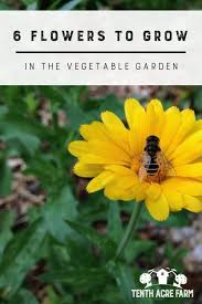 6 flowers to grow in the vegetable garden tenth acre farm