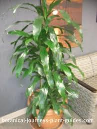 beautiful indoor plants tropical house plants u2013 savingourboys info