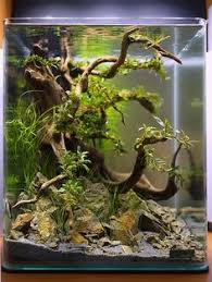 Aquascape Designs For Aquariums Beautiful Driftwood Root For Fish Tank Background Purchase