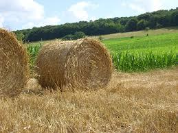 chambre agriculture 71 maine et loire les résultats des élections à la chambre d