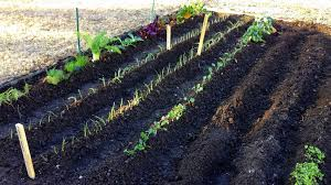 how to start a vegetable garden for beginners the beginning spring vegetable garden youtube