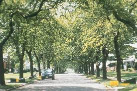 tree canopy cover and zoning past projects projects