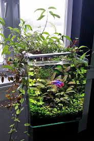Live Plants In Community Aquariums by 170 Best Aquascaping Nano Aquariums Images On Pinterest