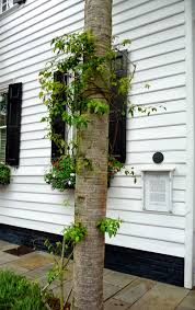 charleston single house wind lost our honeymoon part one charleston south carolina