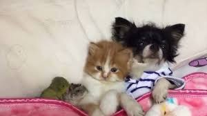 Kitten Bed Dog Kitten Hamster And A Little Parrot Have A Cuddle In Bed