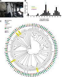 characterization of aspergillus fumigatus isolates from air and
