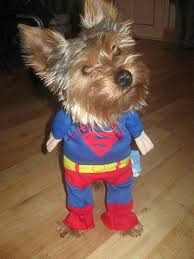 Halloween Costumes Yorkies Xsmall Superman Dog Cat Puppy Halloween Costume Clothes Pet