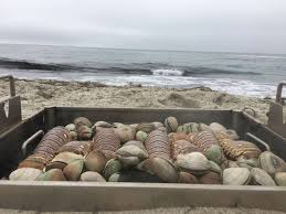 new england lobster u0026 clam bake traditional cook earth oven
