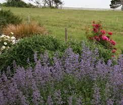 native plants for pots coastal gardening how to garden on the seacoast north coast