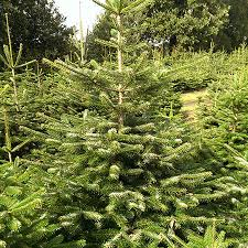 about us van den oever christmas tree wholesale