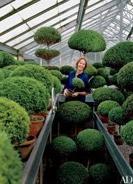 Herb Topiaries Garden Designer Stylesetter And Philanthropist Rachel