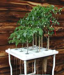 13 best non circulating hydroponics images on pinterest