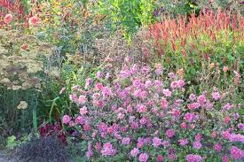 Summer Garden Ideas - a charming late summer garden idea with japanese anemones and