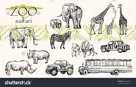 safari jeep coloring page vector hand drawn sketched animal set stock vector 628968194