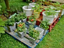 container gardening home outdoor decoration