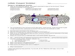 cellular transport worksheet name u2013 guillermotull com