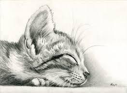 best 25 kitten drawing ideas on pinterest cat drawing happy