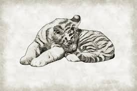 pencil drawing animals free pictures on pixabay