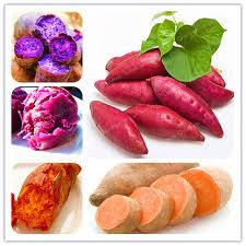 20pcs bag sweet potato seeds vegetables seeds fresh food fruit and