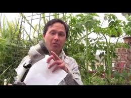 how to create the best soil for planting a fruit tree u0026 more