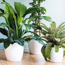Best Plants For Air Quality by Indoor Plants Sunset