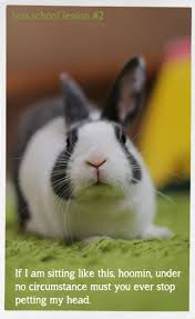 3438 best bunnies images on pinterest animals bunny rabbits and