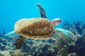 A Key To The Armoire Amy Slate U0027s Amoray Dive Resort Key Largo Florida