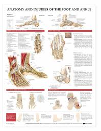 High Ankle Sprain Anatomy Ankle Sprain Anatomy Human Anatomy Diagram