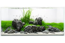 Aquascape Design Layout A Clean Refreshing Iwagumi Style Layout On An Aquavas 120 Cm