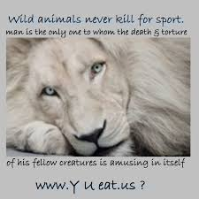 quotes about life death sad sad quotes death animal you and i puppys inspiration on