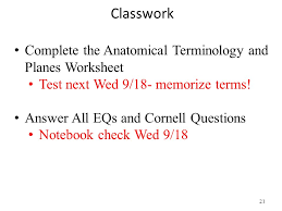 Planes And Anatomical Directions Worksheet Answers 1 5 Anatomical Terminology Ppt
