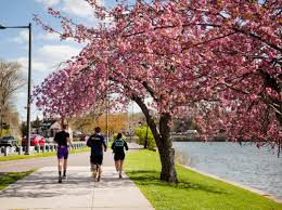 cherry blossom pics top places to view cherry blossoms at peak bloom in philadelphia