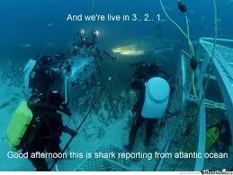 Shark Week Meme - shark week by woug meme center