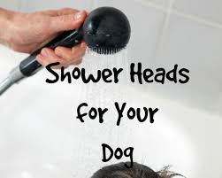 choosing best shower heads for your