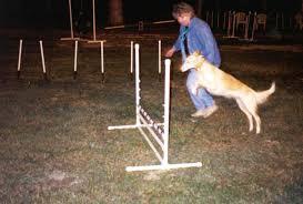 afghan hound agility lagniappe hounds punzi does agility