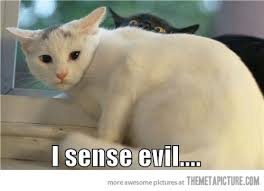 Scared Cat Meme - what the cat thought and a few other purrfect jokes theferkel