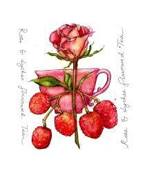 lychee fruit drawing caroline u0027s studio weekword