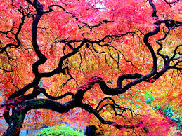 27 gorgeous photos of trees from this fall