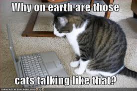 Cat Laptop Meme - album funny pictures offended cat laptop