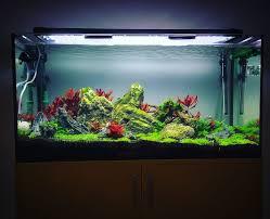 Aquascape Com 292 Best Aquascape Images On Pinterest Aquascaping Aquarium