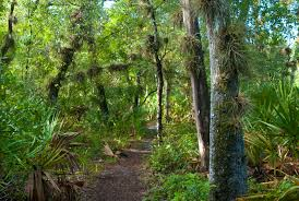 Florida forest images Florida trail little big econ state forest florida hikes jpg