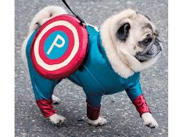 in costumes pugs in costume ideas for your dog on reader s digest
