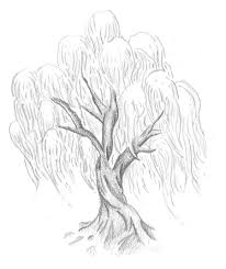 willow tree by 44z66 deviantart com on deviantart tree