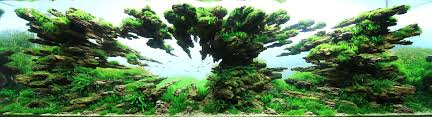 japanese aquascape the incredible underwater art of competitive aquascaping colossal