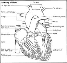 coronary artery disease heart disease blood pain body