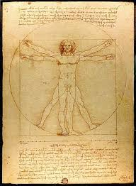 Outline The Anatomy And Physiology Of The Human Body Outline Of Human Anatomy Wikipedia