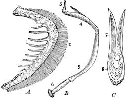 parts of fish gills clipart etc