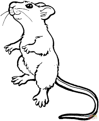 impressive mouse coloring pages 34 701
