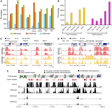 Dna Mapping High Resolution Mapping Of Epigenetic Modifications Of The Rice