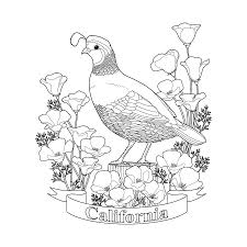 California State Flag California State Bird And Flower Coloring Page Digital Art